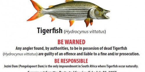 Tiger Fish Notice