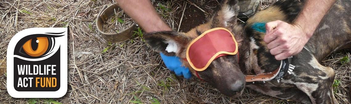 Thank You – Wildlife ACT Fund