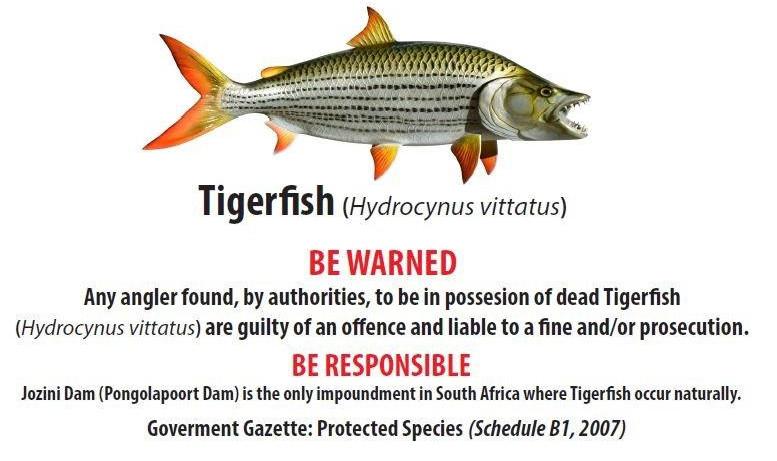 Tiger Fish Notice